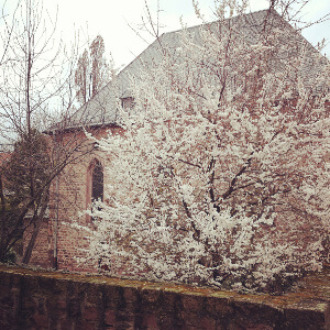 Synagoge Worms im Frühling