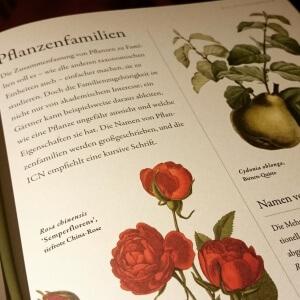 Seite aus Botanik für Gärtner, Dumont Verlag