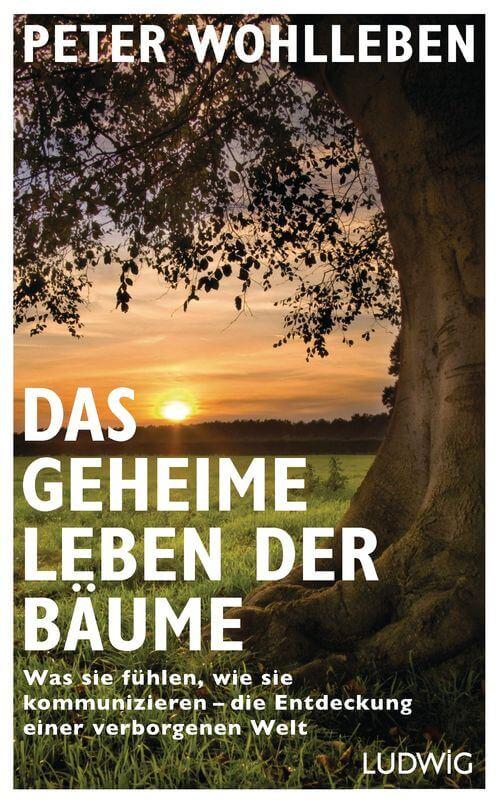 Sachbuch Das geheime Leben der Bäume