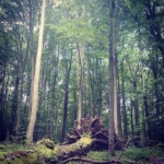 Hainich – wandern im Noch-Nicht-Urwald