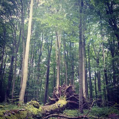 Wandern im Hainich Buchenwald