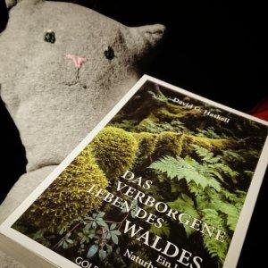 Genusslesen mit dem Buch Das verborgene Leben des Waldes von David Haskell