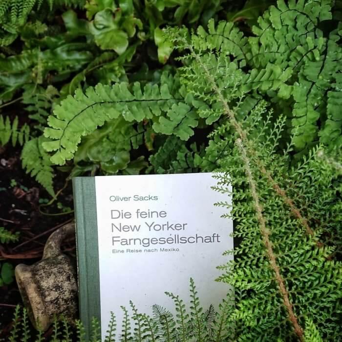 Sachbuch: Die feine New Yorker Farngesellschaft - Eine Reise nach Mexiko. Autor Oliver Sacks. Buch liegt im Farn-Beet.